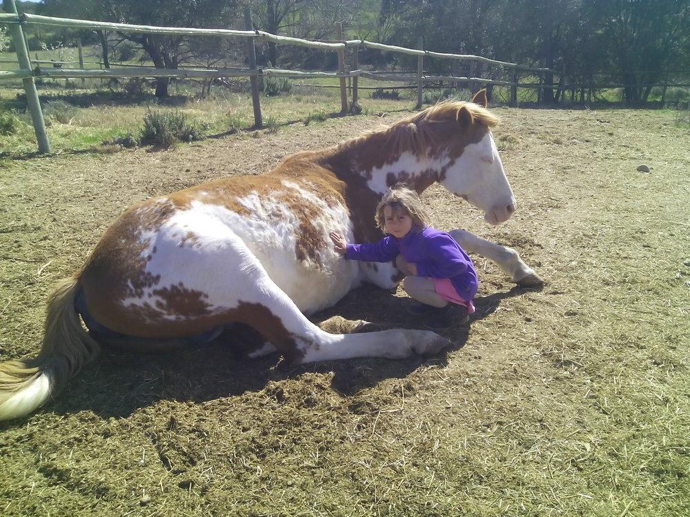 caballos hipica .jpg
