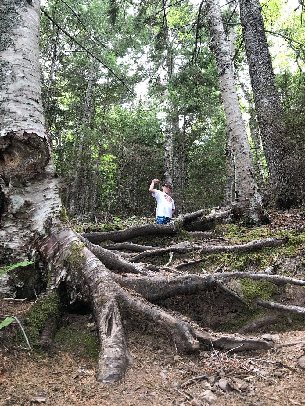 Climbing the roots on Matthews Head.