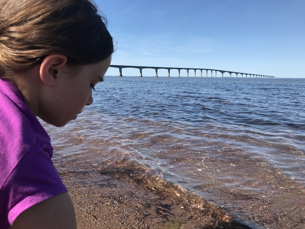 Sophie beach combing on the New Brunswick side of the Confederation Bridge.