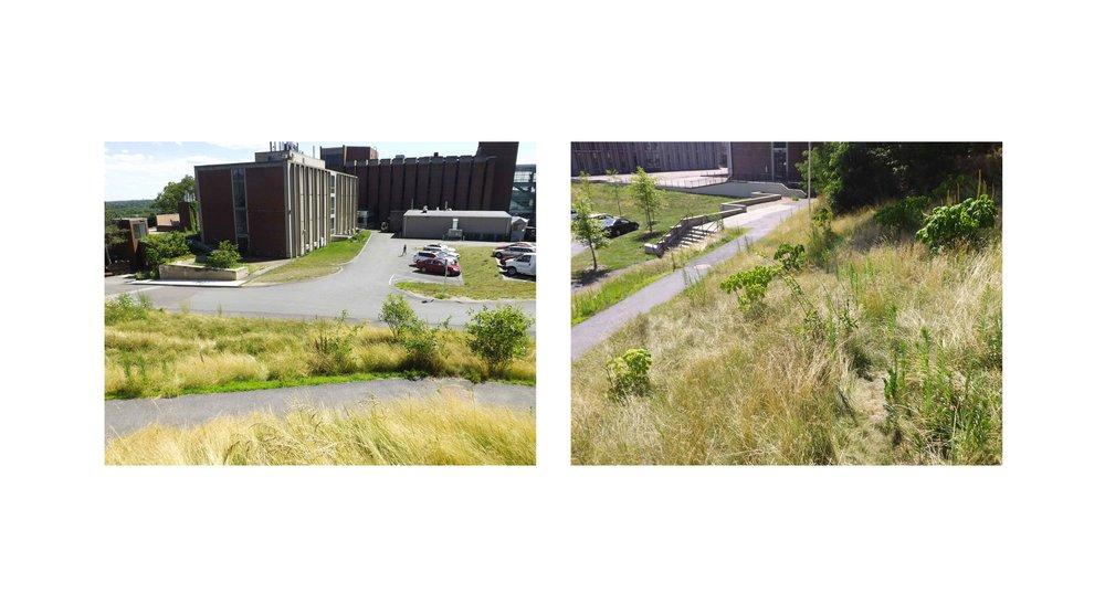 grass-view2.jpg