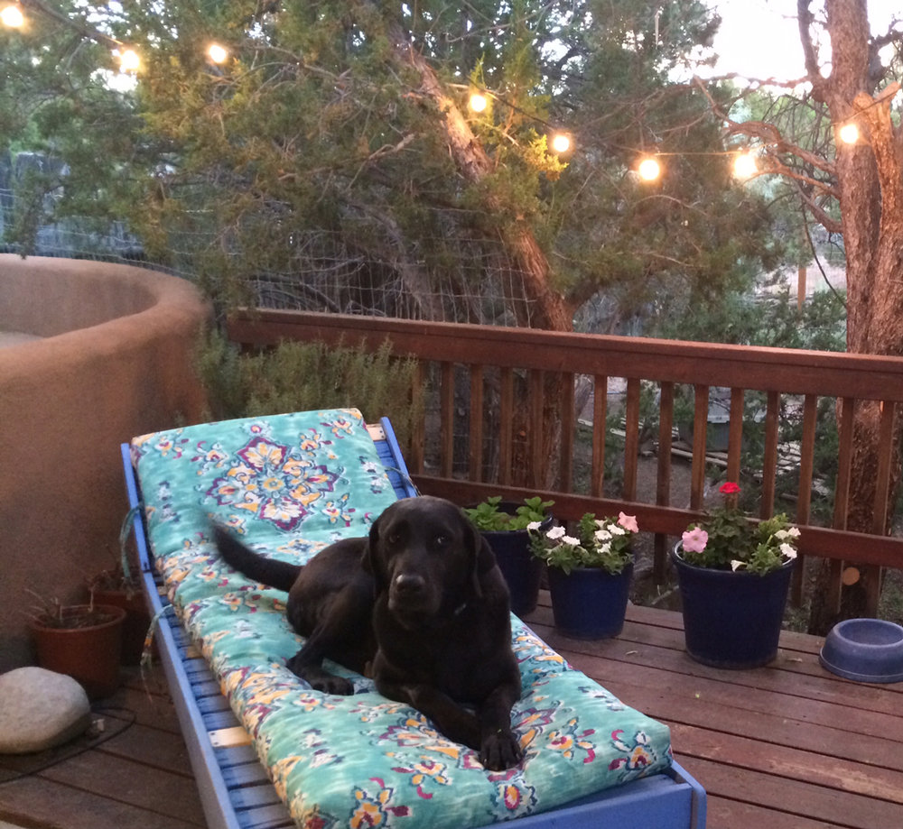 Finnegan keeping my spot warm on our deck