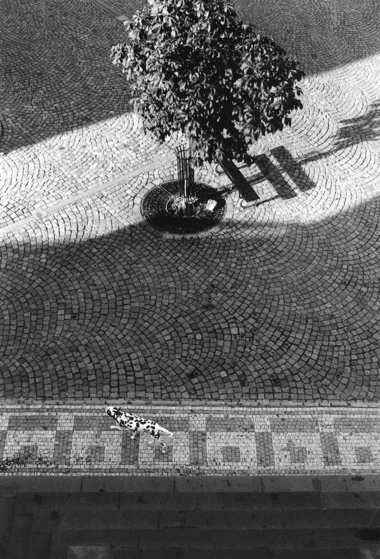 Le dalmatien, Prague 2005
