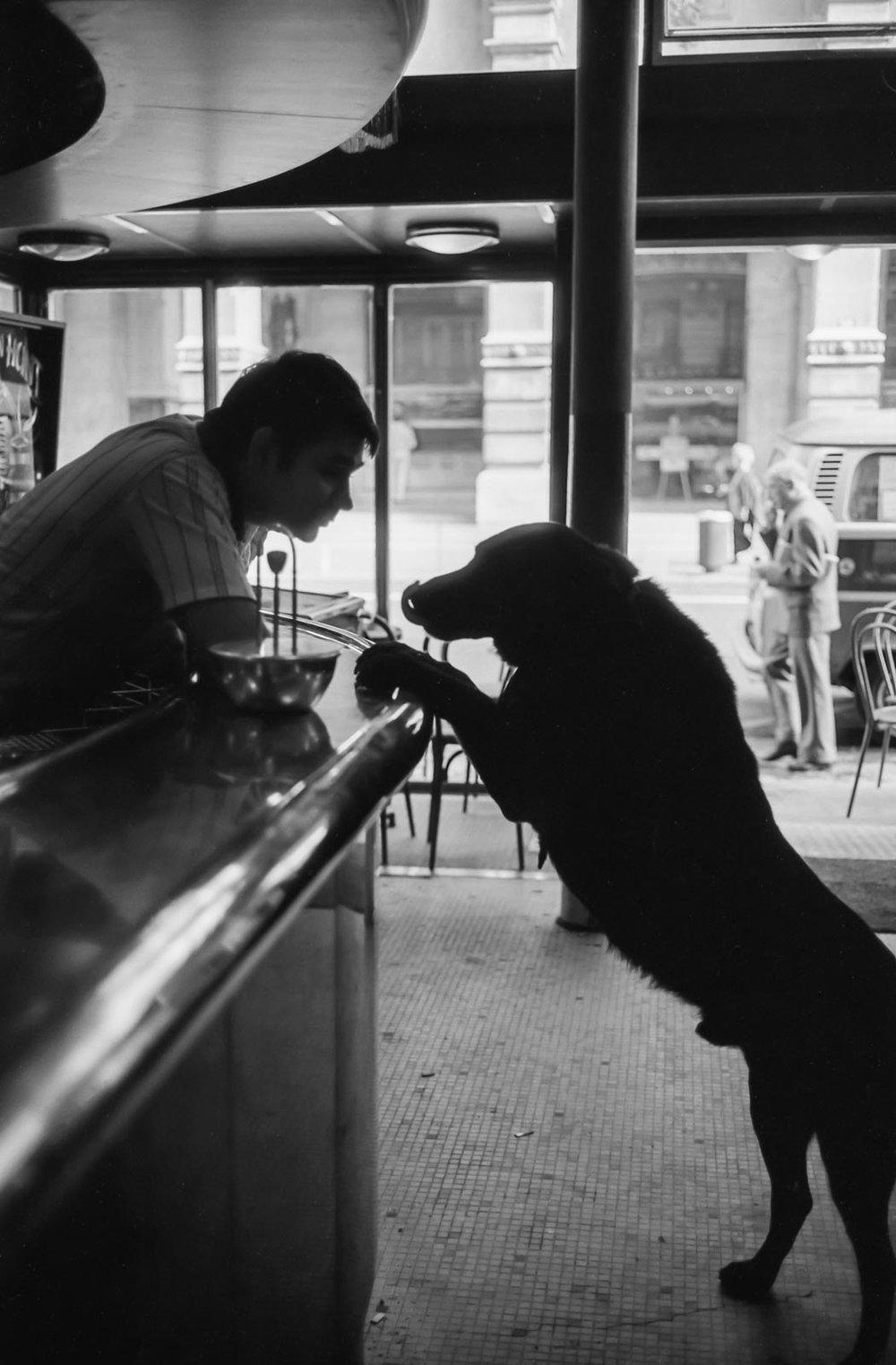 Le chien du café, Paris 2001