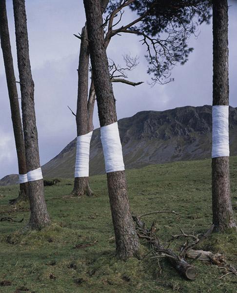 Zander Olsen Tree Line #2