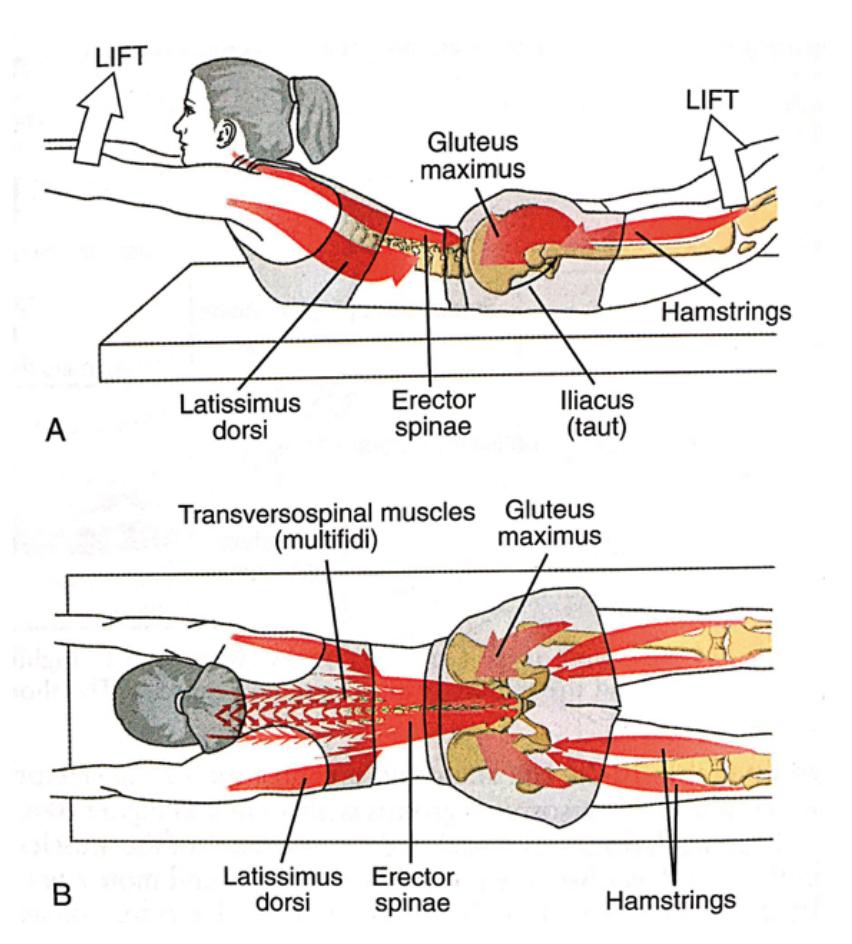 plano-sagital-columna-vertebral