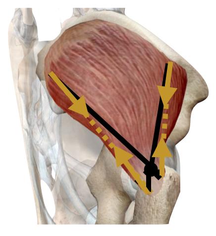 mecánica- flexión extensión cadera