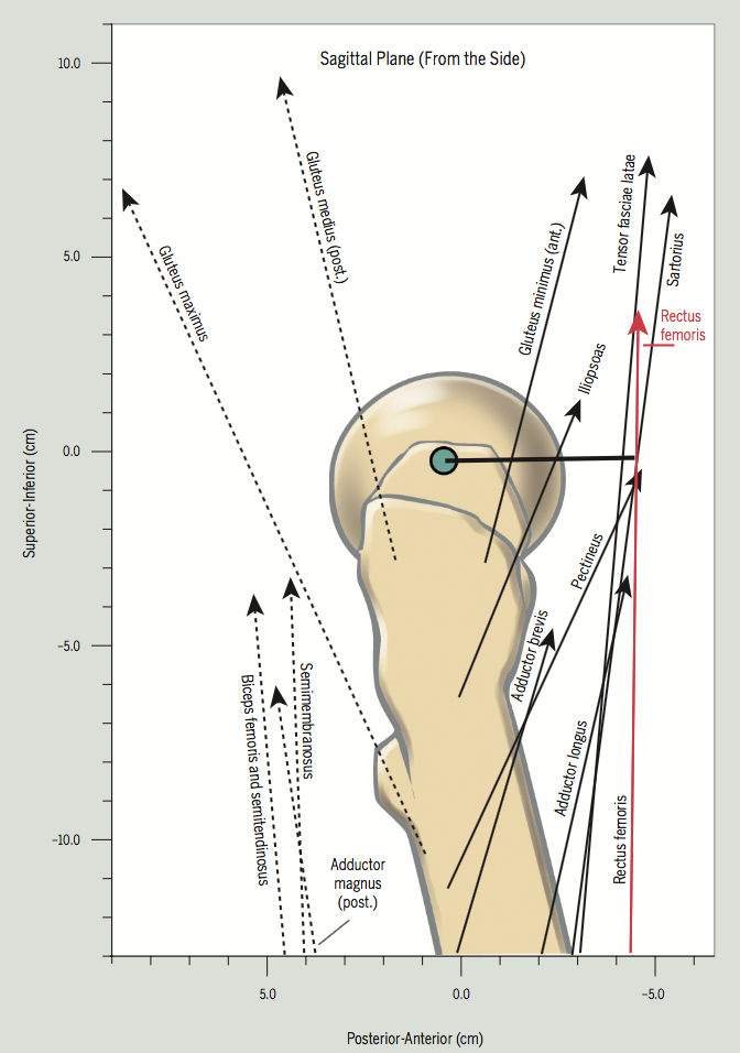 Donald A. Neumann. Kinesiology of the musculoskeletal system.