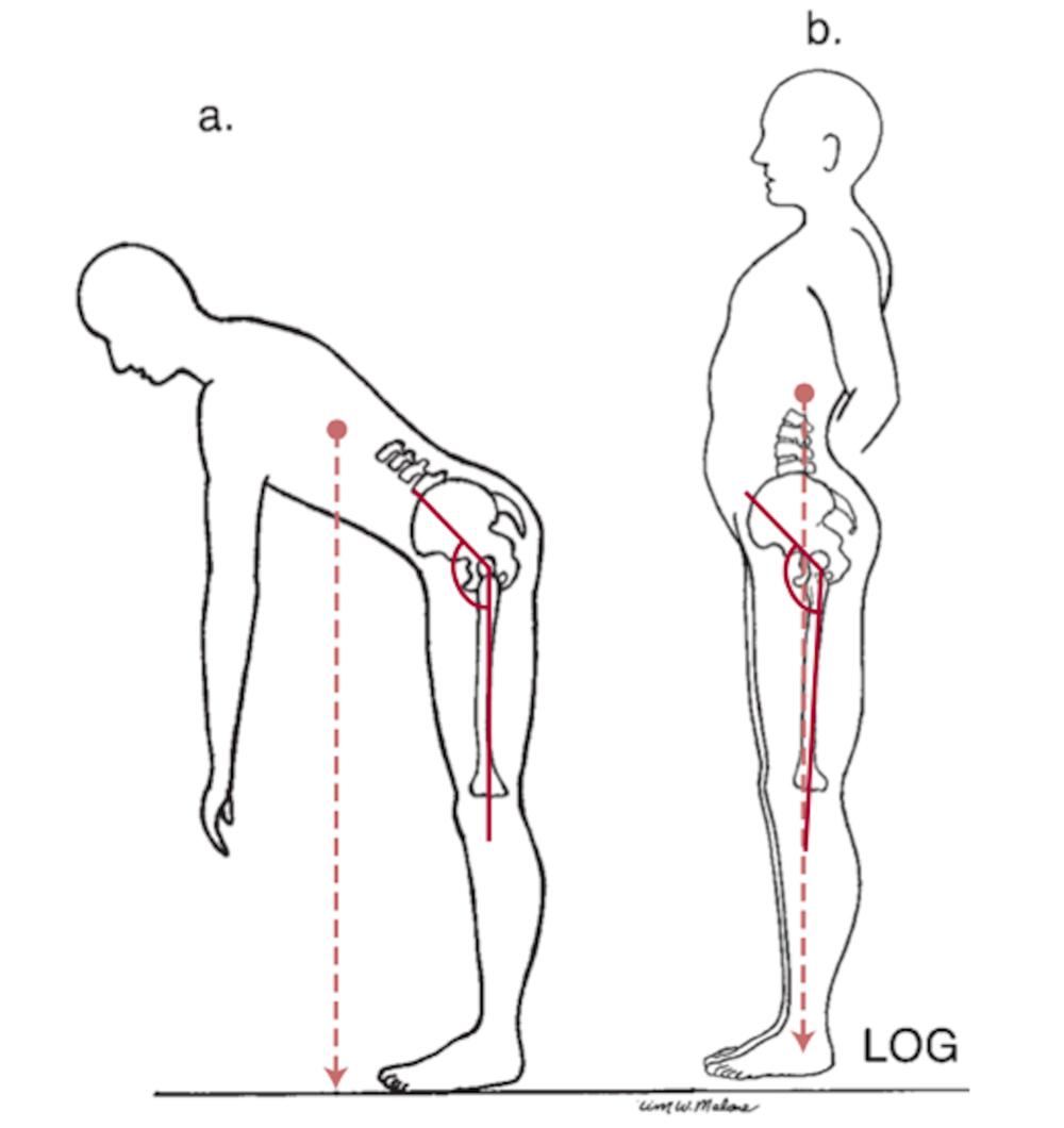 El Músculo del Mes | Glúteo Mayor: función muscular — NMIT