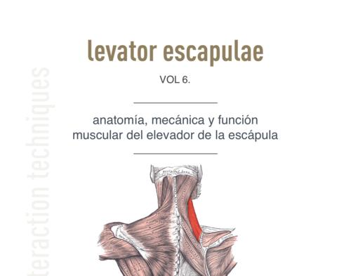 El Músculo del Mes | Elevador de la escápula: Descargable — NMIT