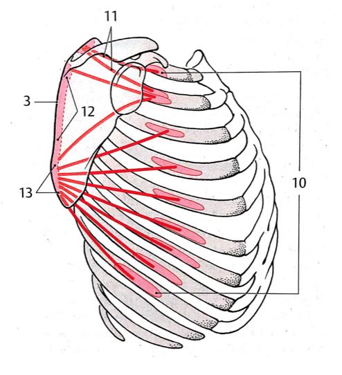 Platzer. Atlas de anatomía.