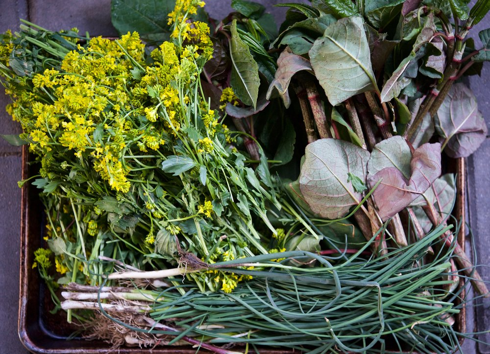 flowering bittercress, japanese knotweed, field garlic and wild onion harvested along the bank of the delaware river in sullivan county, ny.