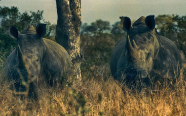 SOMETHING THAT MATTERS   One man's journey through Africa, discovering the harsh truths of rhino poaching and uncovering the urgency to address the issue. Yet hope remains.