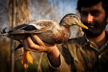 SKY IS NOT EMPTY!   For centuries the people of the Fereydonkenar region of northern Iran have hunted birds using a traditional method called Doma or Daam'gaah (catching quietly). Ghasem is a young man who hunts migrating birds for living.