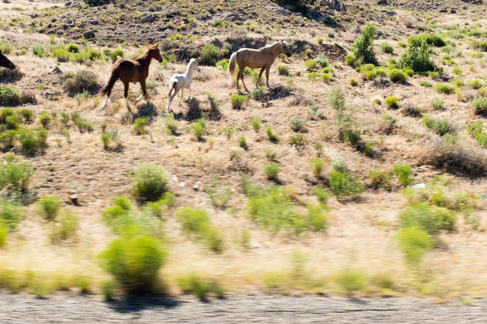Horses. Being swift and beautiful in the desert.