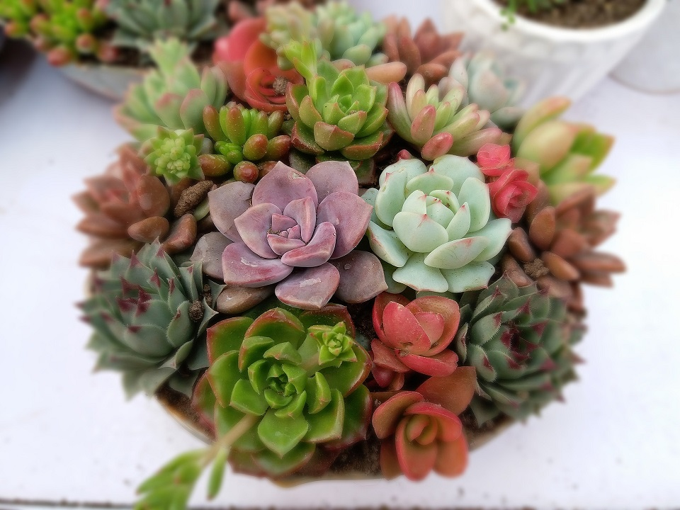 Succulent photo from Pixabay