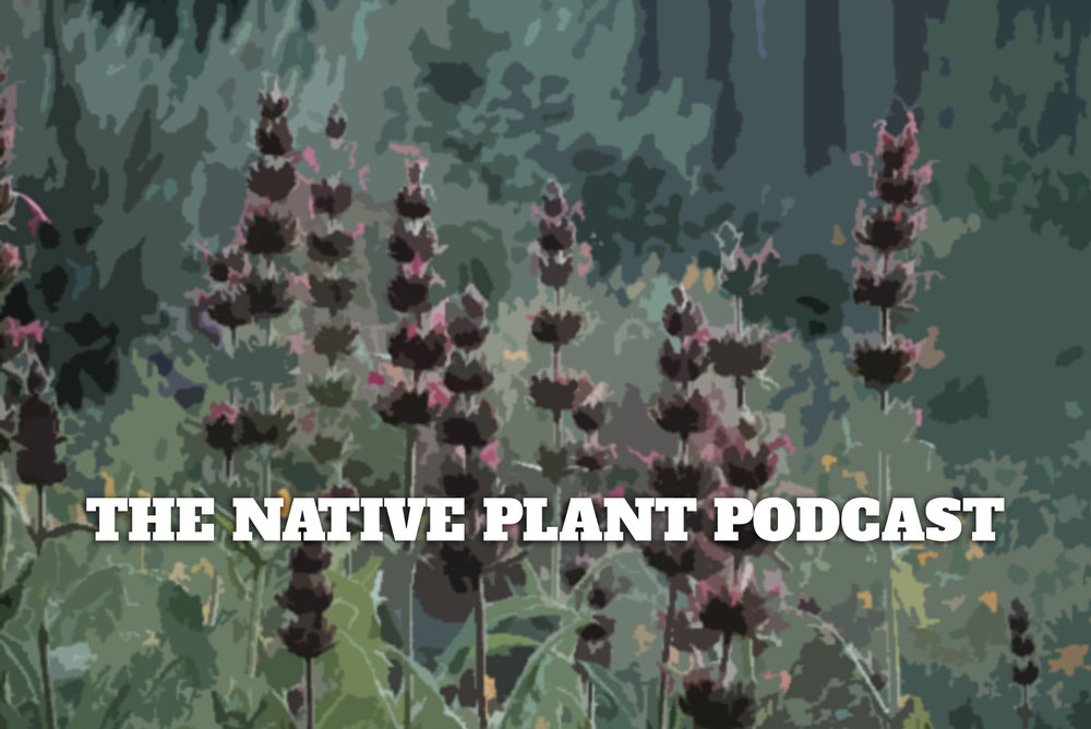 Thomas talks with Mike Berkley and John Magee on the Native Plant Podcast about beer, design, and plants.