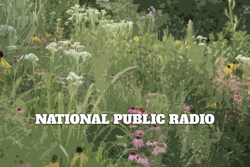 "Thomas talks with Jennifer Jewell of NPR's ""Cultivating Place: Conversations on Natural History and the Human Impulse to Garden"""