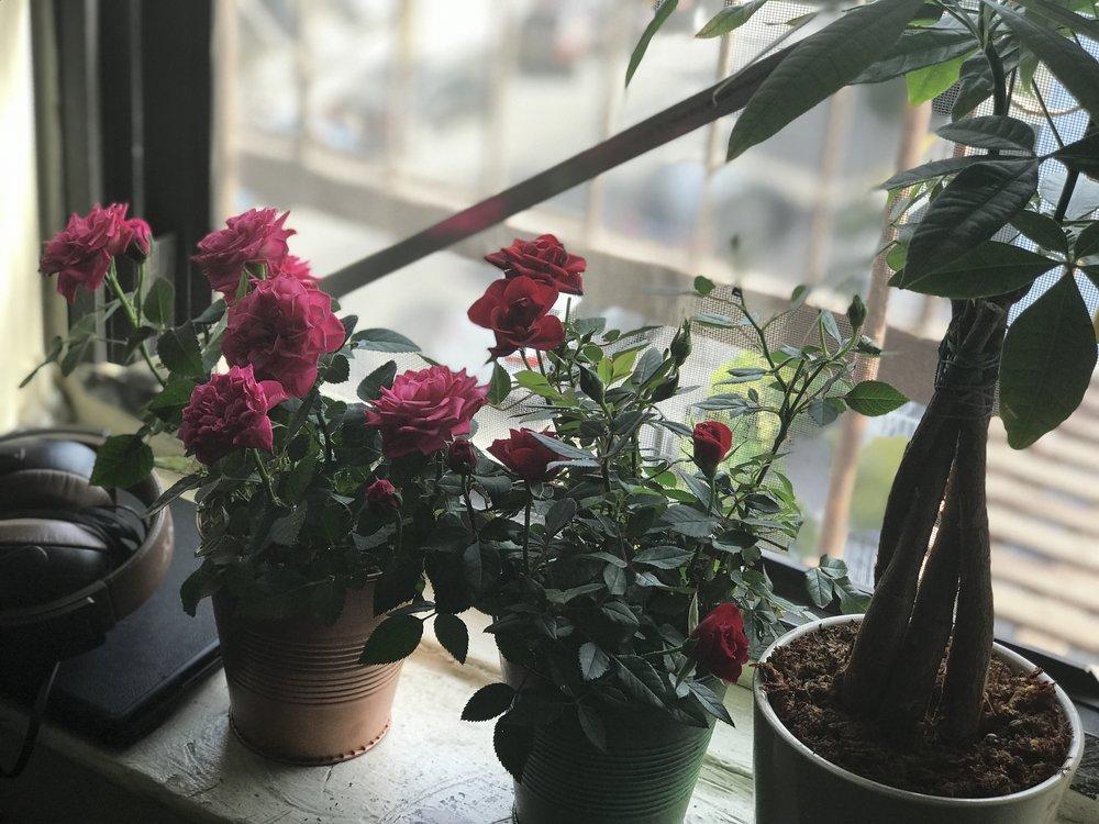 My happy lives in my window - photo by Noah Love