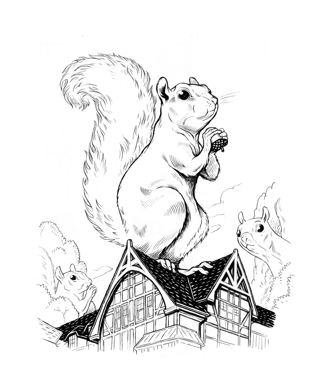 White Squirrels