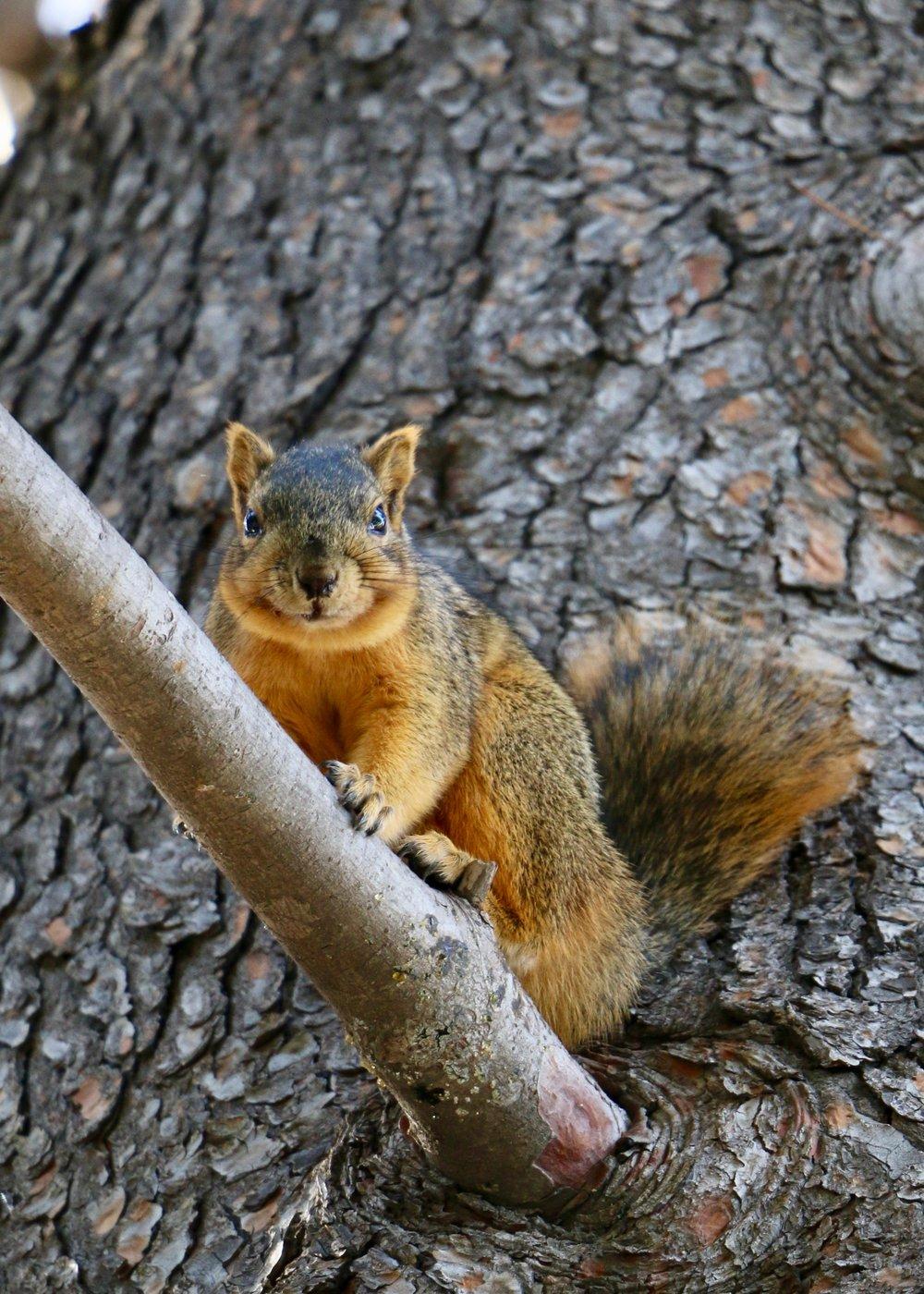ScottVomvolakis_VomvoVisionz_Squirrel.jpg