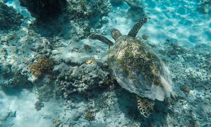 gili-islands-snorkeling.jpg