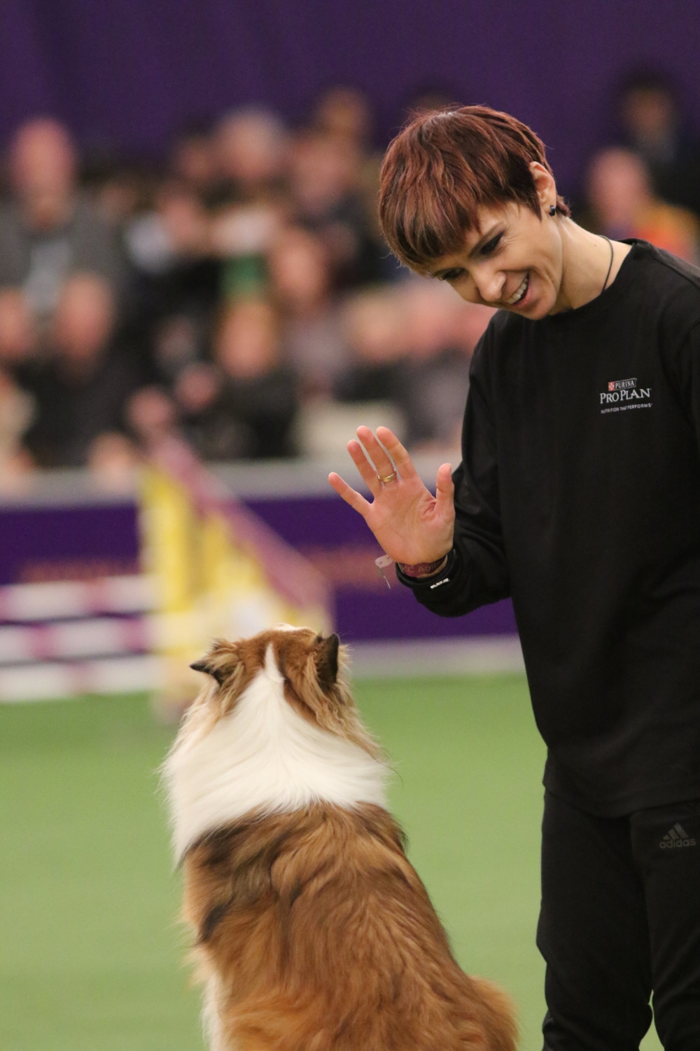 Stephanie and Mika at Westminster Agility trial in 2017
