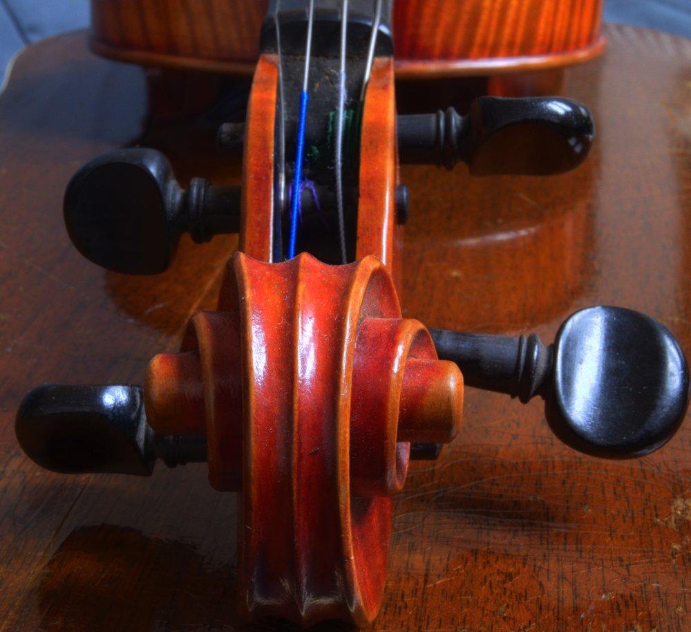 fiddlehead2.jpg