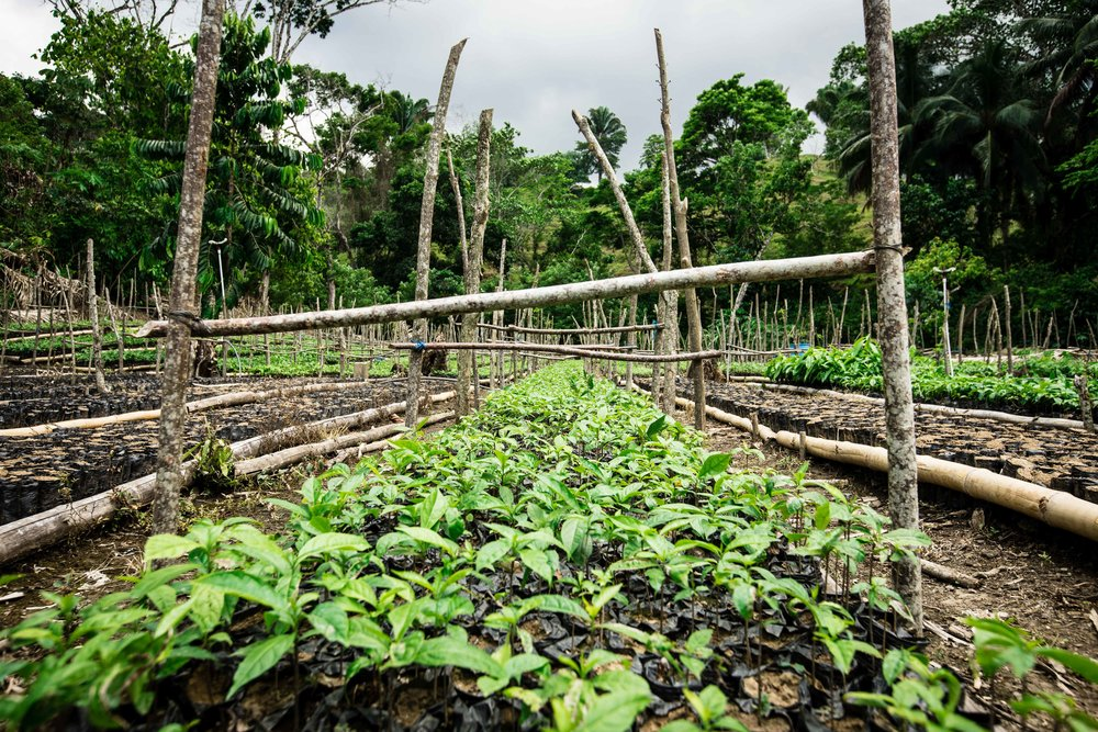 FUNDAECO's tree nursery