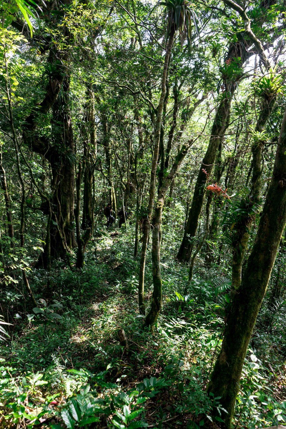 Chiapas cloud forest with Pro Natura