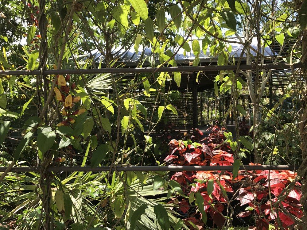 Botanical Garden, Naples, FL (4).JPG