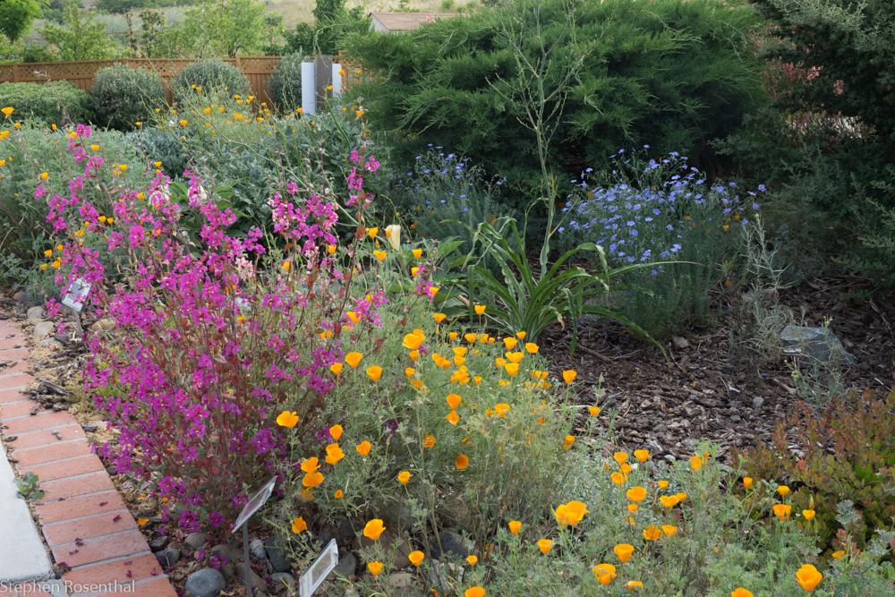 garden_(5_)May_08,_2016.jpg