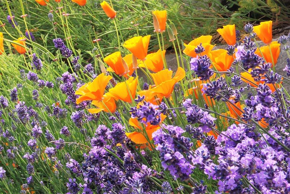 garden spring.jpg