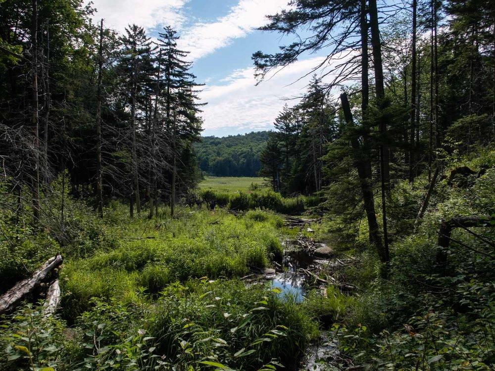 Long trail bog (1 of 1).jpg