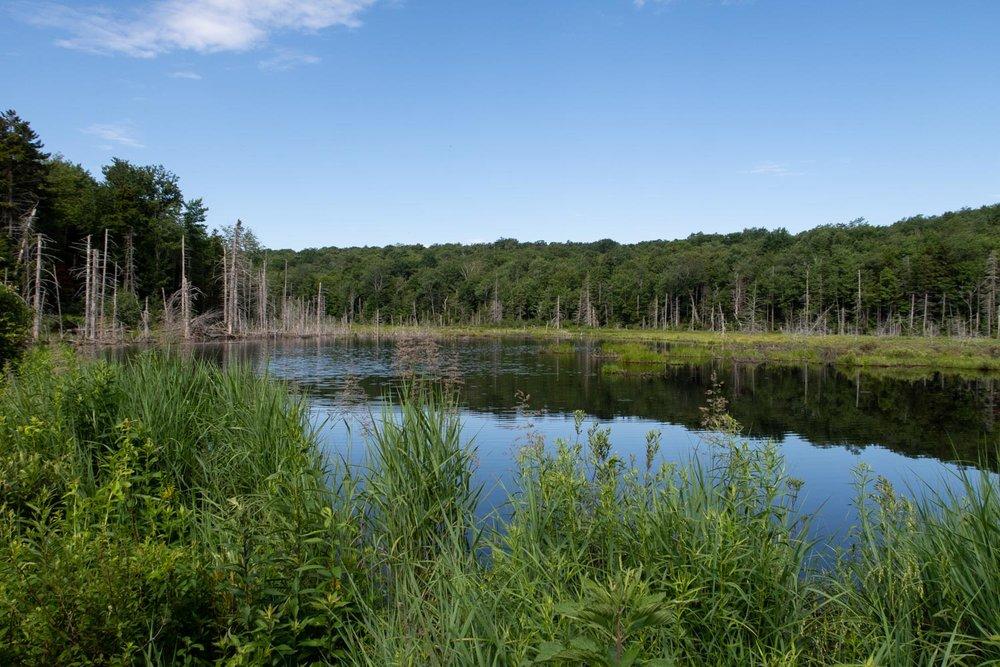 Long trail beaver pond (1 of 1).jpg
