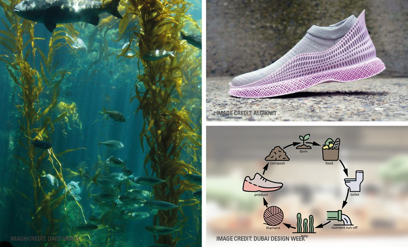 AlgiKnit is made from kelp, a renewable ingredient that grows up to 10 times faster than bamboo