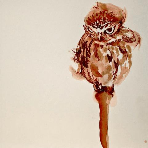 owl_sketch.jpg