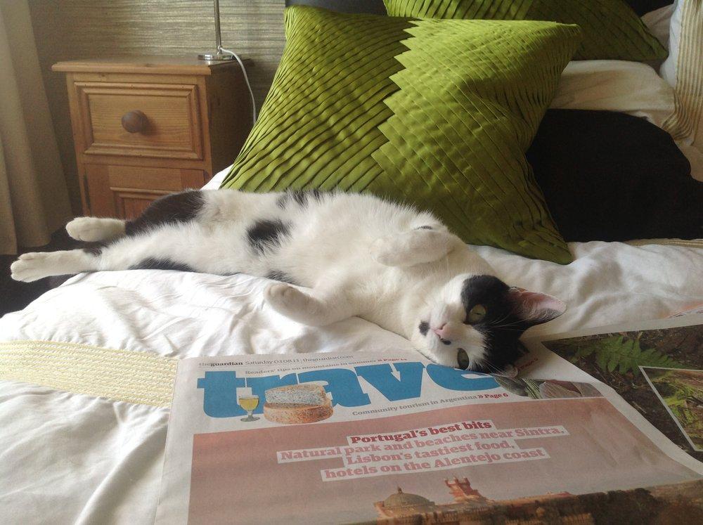 Lazy Saturdays with Tinks McGee