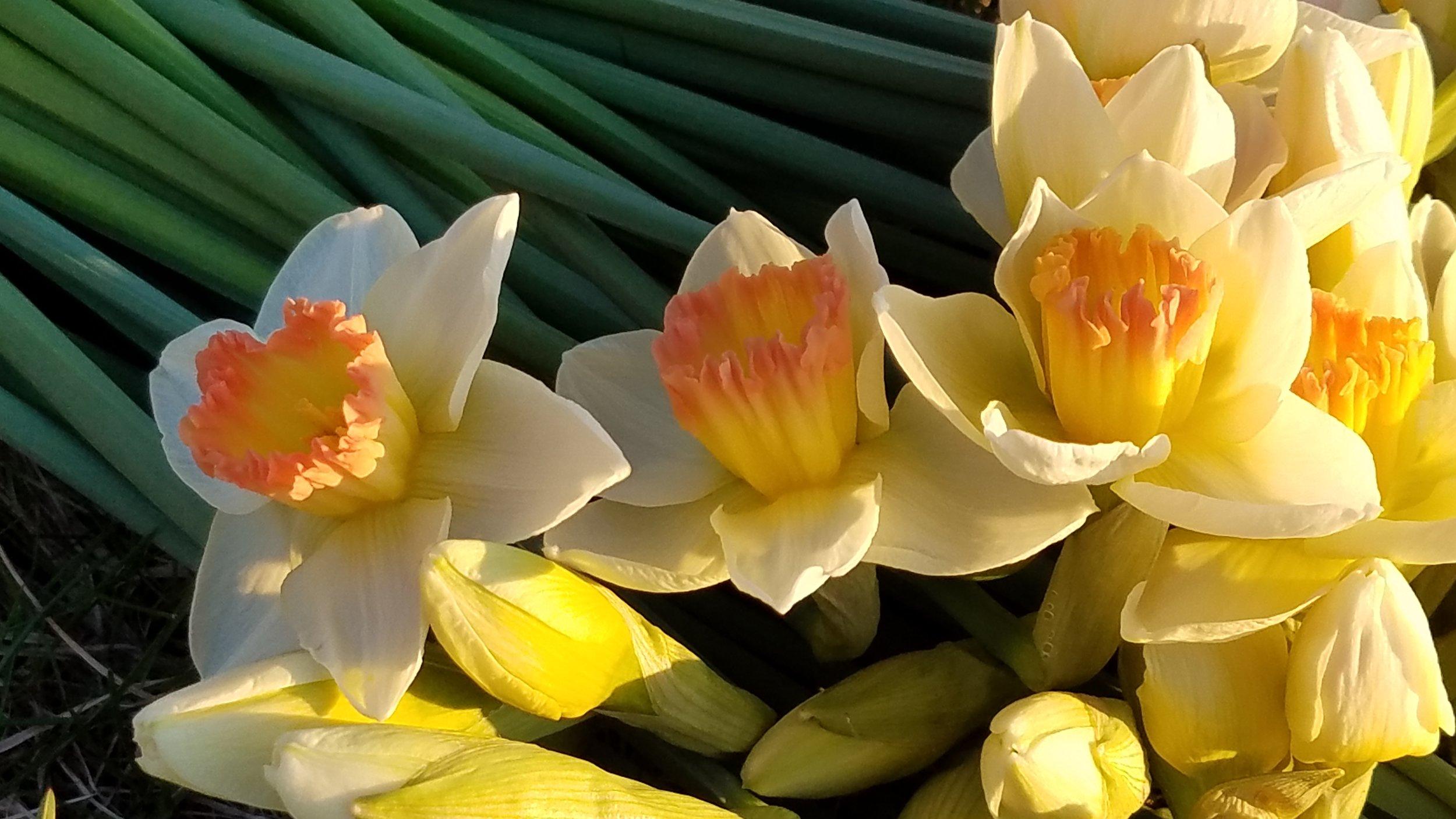 Our Farm Leelanau Specialty Cut Flowers