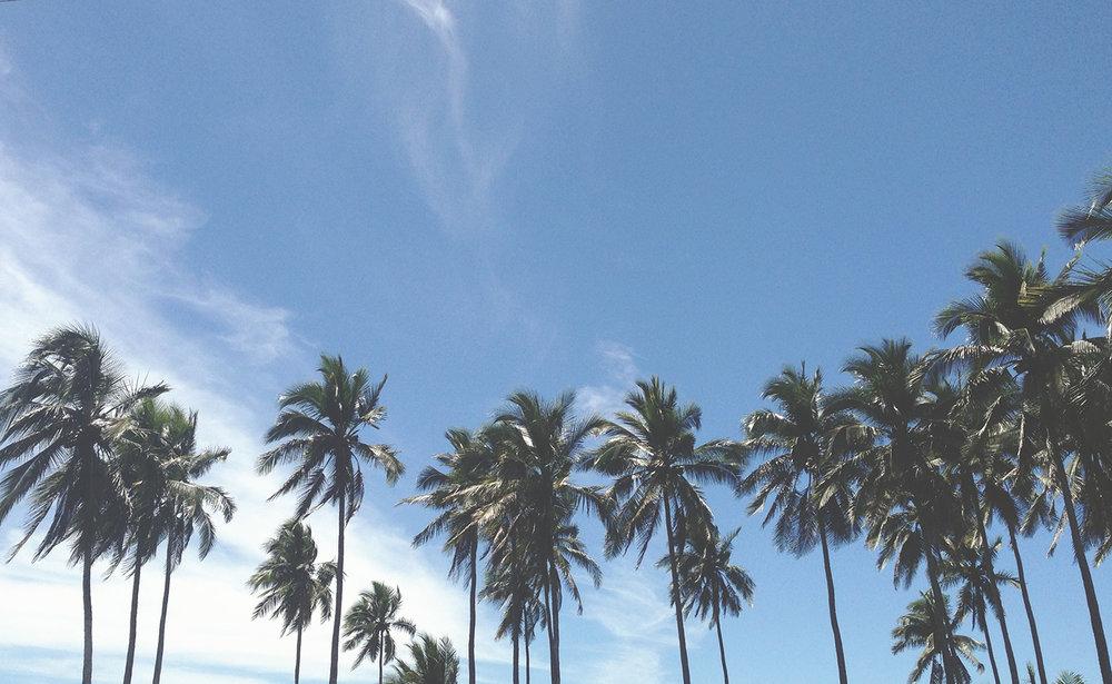 Bea Rue Professional Freelance Wedding Event Travel Photographer Hudson Valley Mexico Palm Trees.jpg