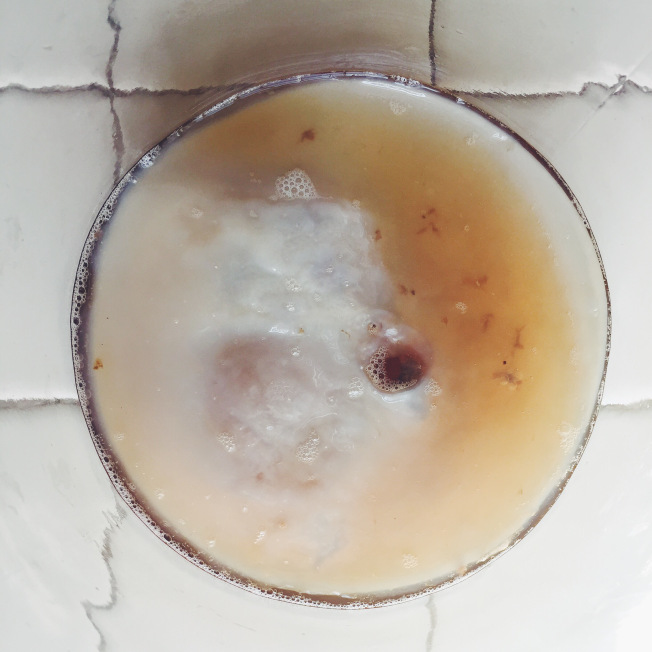 bird's eye view of my SCOBY in its glass jar