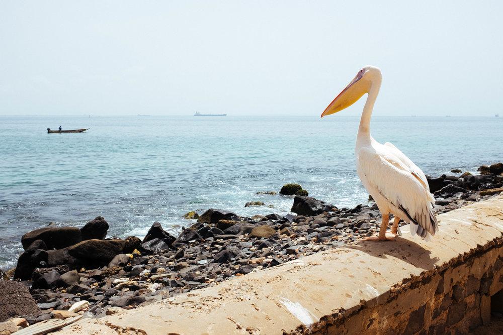 Senegal-74.jpg