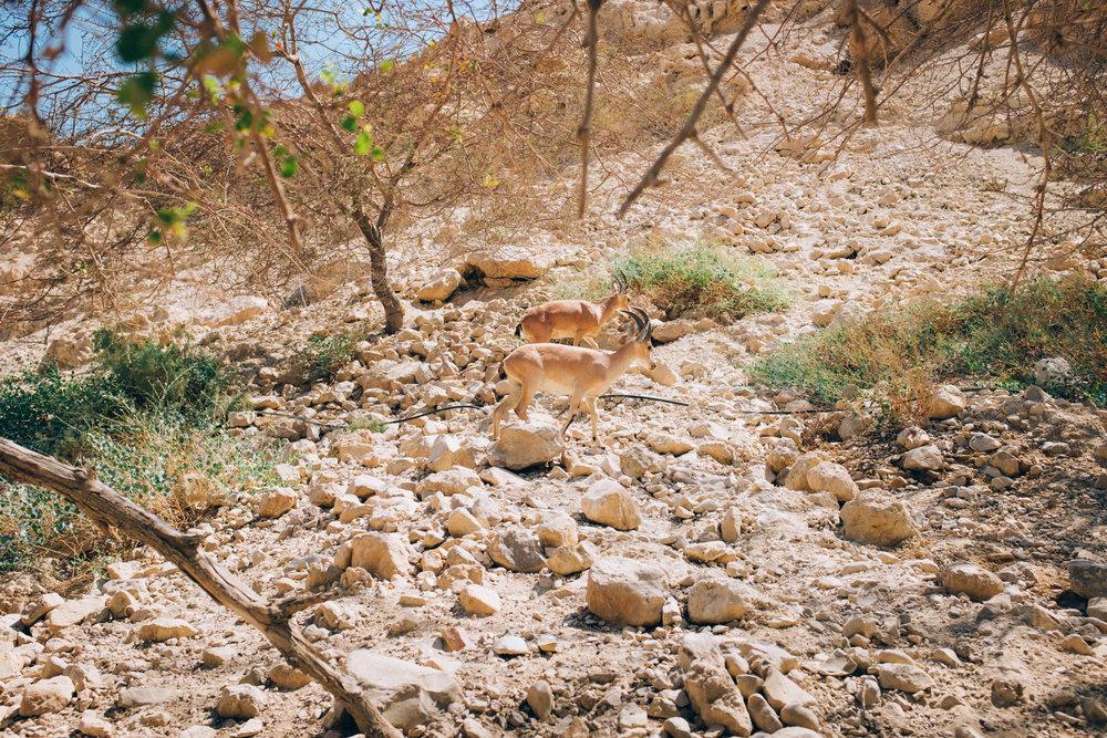 Israel-90.jpg