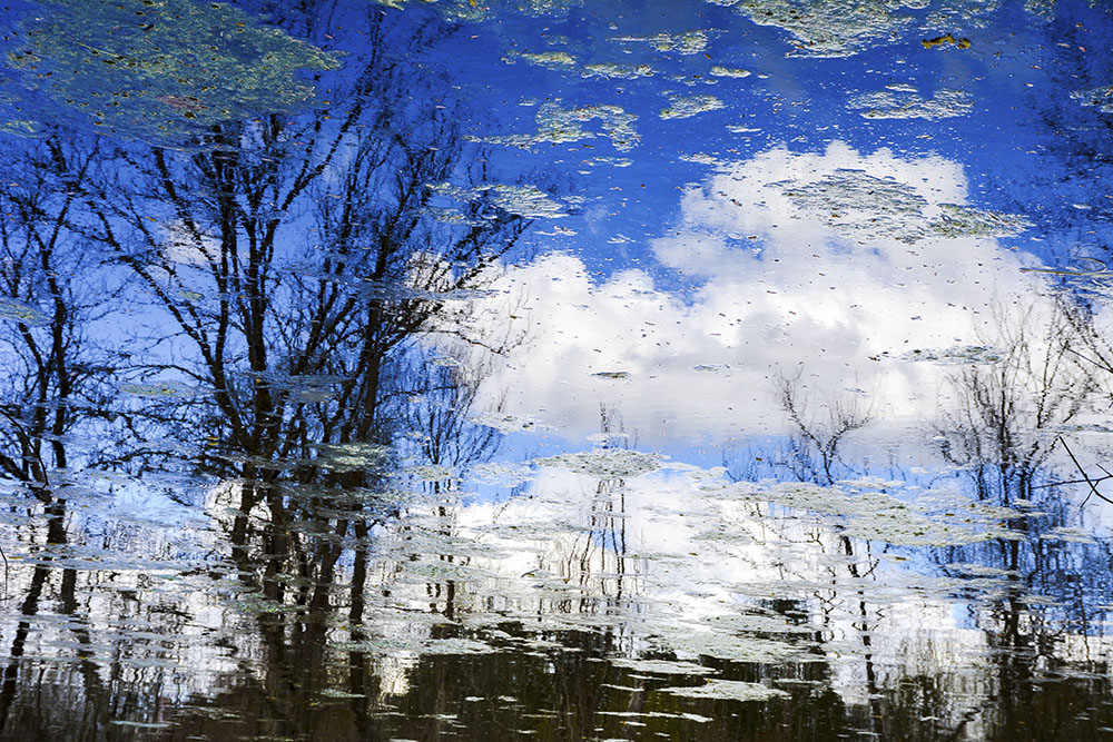 Winter Trees Miller Lake, Dacula, GA March, 2017