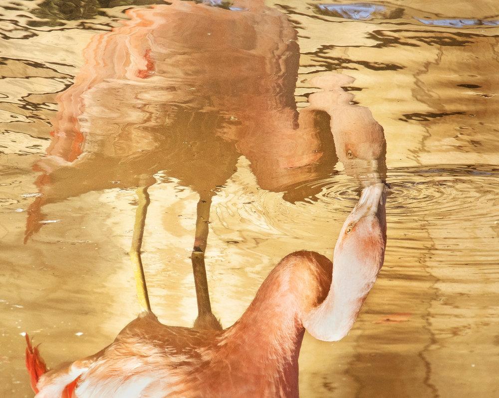 Flamingo Sunshine Atlanta Zoo Unfiltered March 2018