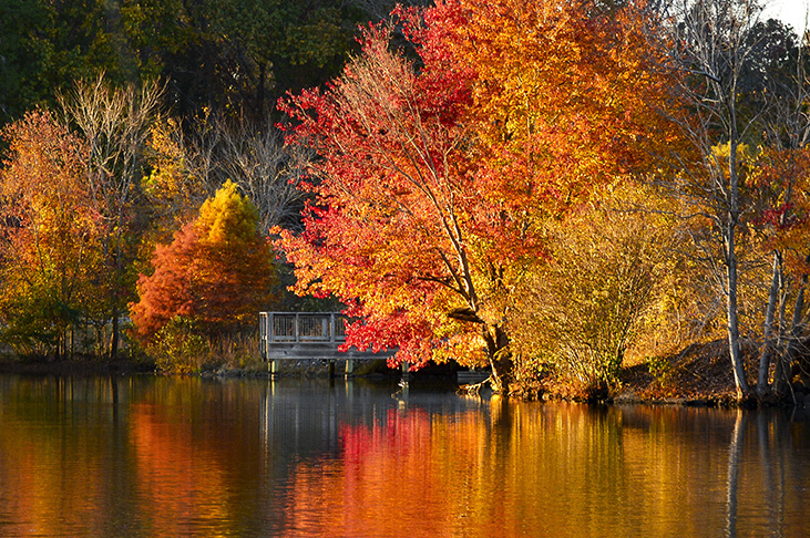 Little Mulberry Park Dacula, GA Fall 2016