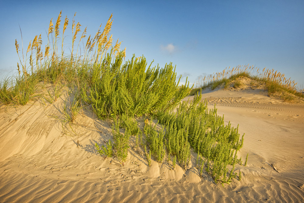 Bouquet Sea Oats Outer Banks, NC August, 2018
