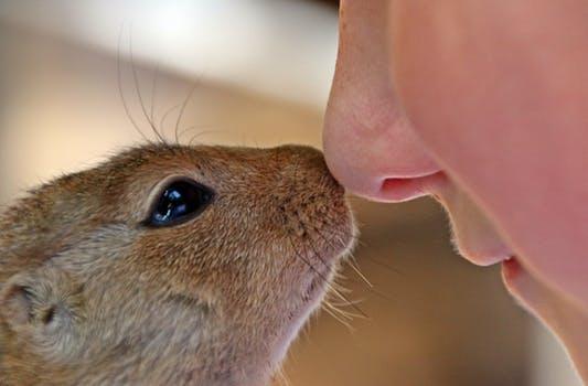 unconditional love hamster.jpeg