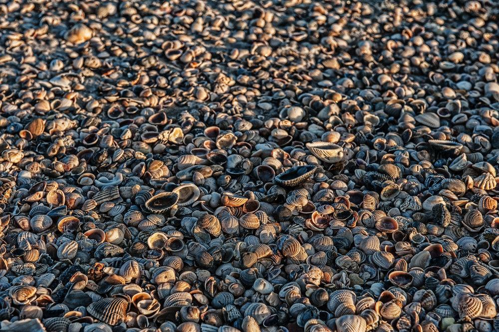 Shells-184-2.jpg