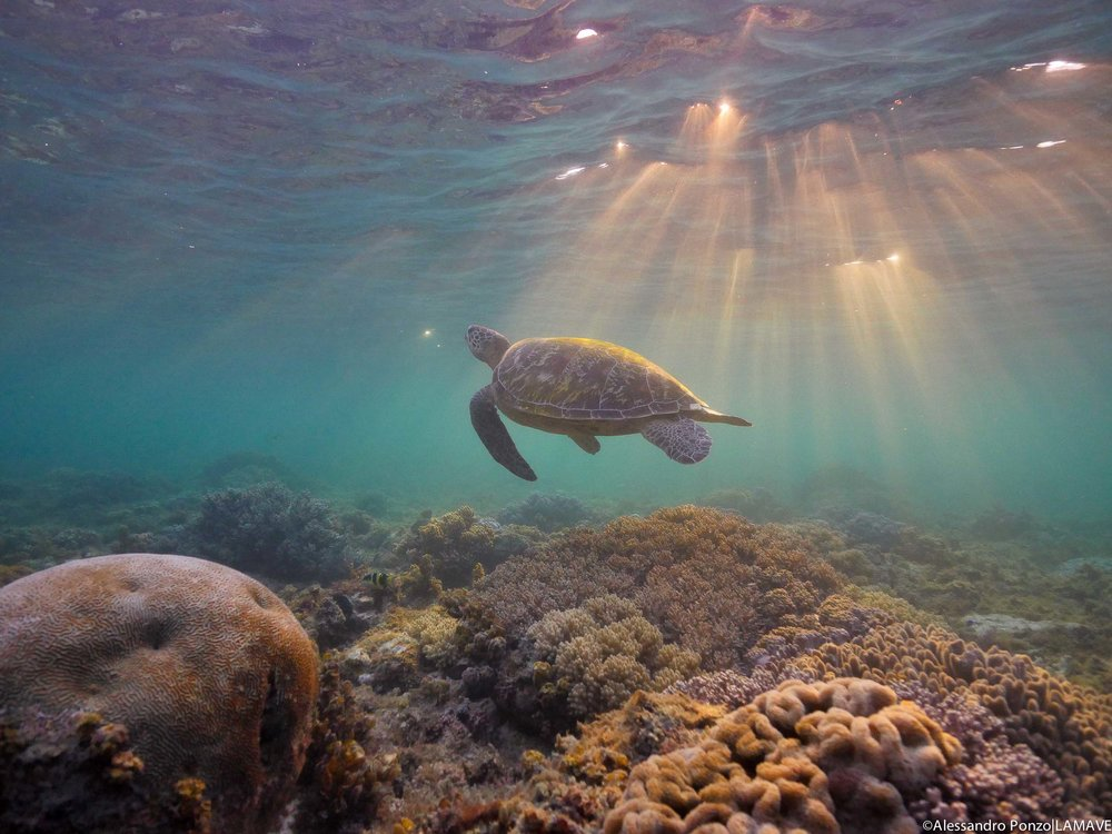 turtle-lamave-philippines