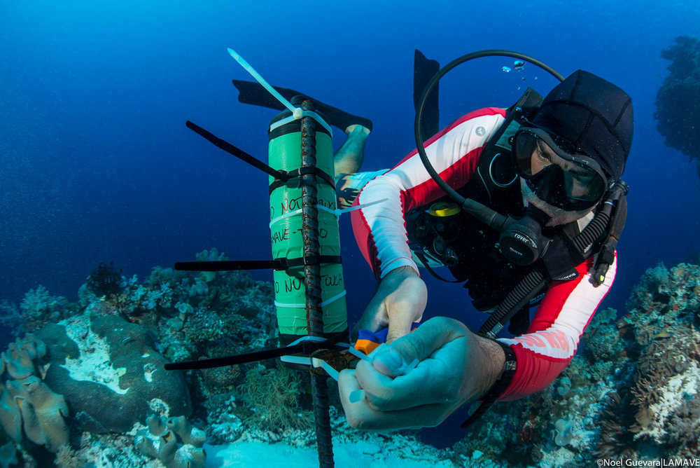 Gonzalo Araujo deploys an acoustic receiver in Tubbataha Reefs